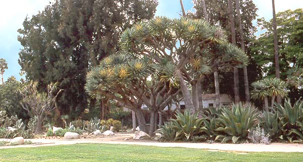 Beverly Gardens Park cactus garden photo
