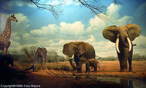 Natural History Museum Diorama